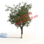 植物模型系列一 全模型渲染素材