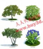 植物模型系列二