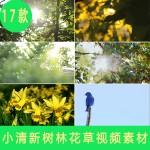 小淸新自然风光绿色植物 清晨阳光透过树木森林风景 高清视频素材